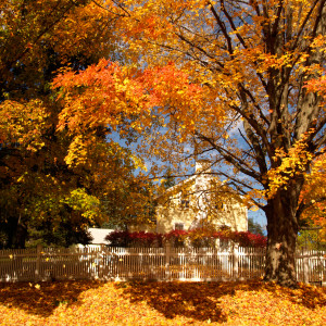How To Capture Stunning Fall Foliage by Olympus Trailblazer Anne Day