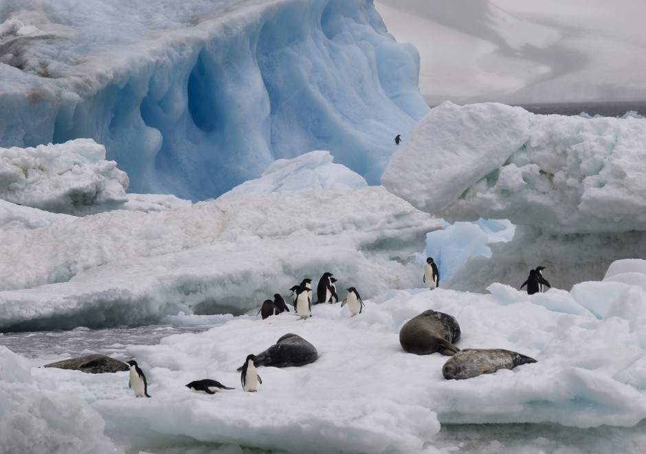 Antarctica Peninsula Brown  Bluff and